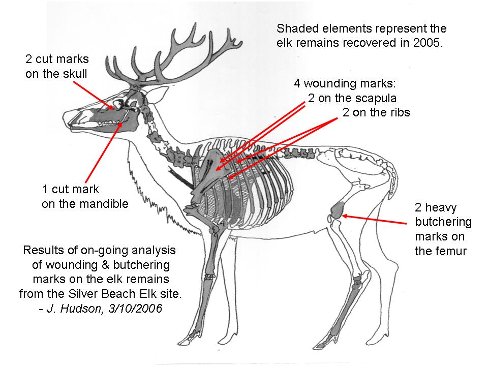 Deer Meat Info in addition NSS furthermore Beef 20chart also Deer together with Wild Game Processing. on deer meat cuts diagram